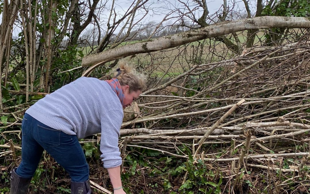 The Value of Hedgelaying